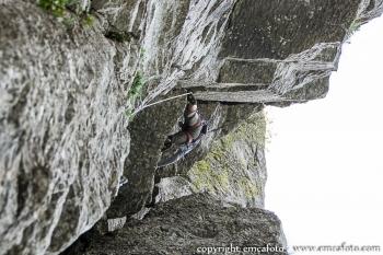 Climbing-21.JPG